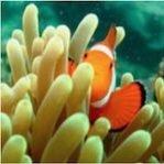 Aquafin Reef Salt